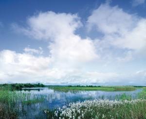 Lough Boora 2